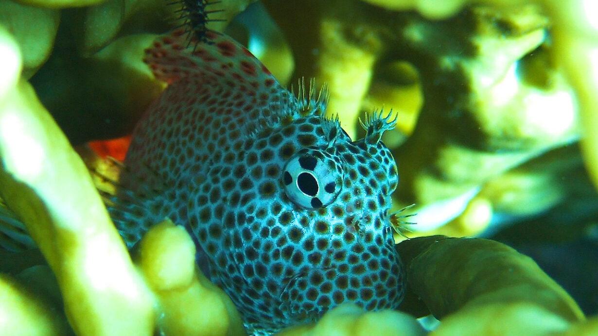 """""""Unterwasserwelten – eine Reise unter den Meeresspiegel"""" – Skype-Vortrag"""